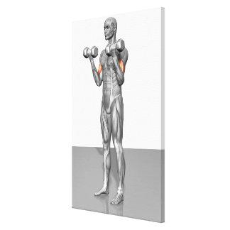 Rizo derecho del bíceps impresiones en lona