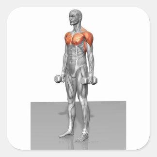 Rizo derecho del bíceps pegatina cuadrada