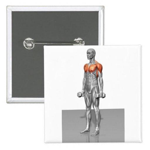 Rizo derecho del bíceps pin