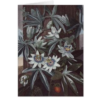 RJ Thornton - Blue Passion-flower Card