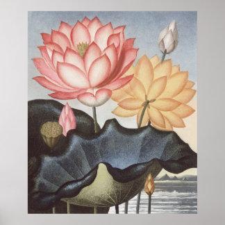 RJ Thornton - la haba egipcia sagrada - Lotus Póster