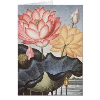 RJ Thornton - la haba egipcia sagrada - Lotus Tarjeta De Felicitación