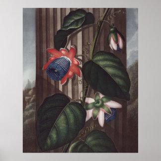 RJ Thornton - Pasión-flor coa alas Póster