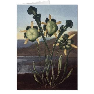 RJ Thornton - Sarracenia Pitcher Plant Greeting Card