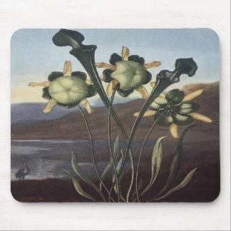 RJ Thornton - Sarracenia Pitcher Plant Mouse Mats