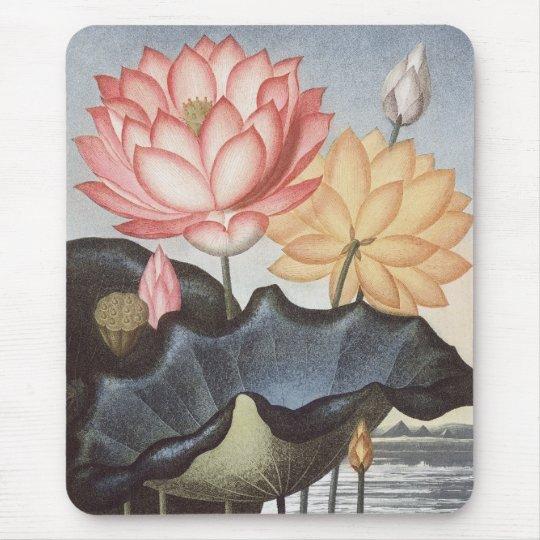 RJ Thornton - The Sacred Egyptian Bean - Lotus Mouse Pad