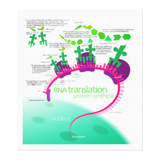 RNA Translation in Protein Synthesis Diagram Canvas Print