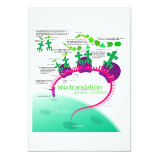 RNA Translation in Protein Synthesis Diagram Card