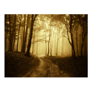 Road in a dark forest with fog postcard