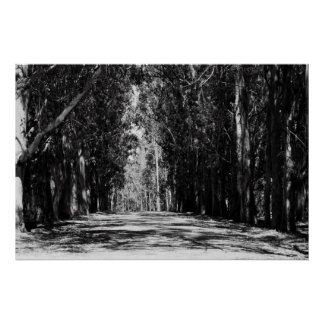 Road In A Park Poster,Print Poster