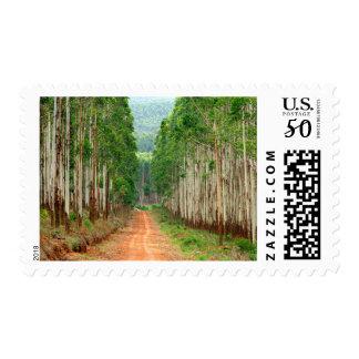Road Through Eucalyptus Plantation Postage