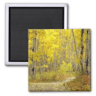 Road with autumn colors and aspens in Kebler 2 2 Inch Square Magnet