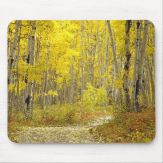 Road with autumn colors and aspens in Kebler 2 Mouse Pad