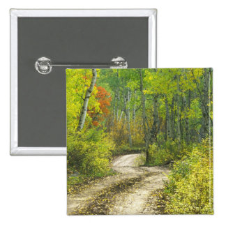 Road with autumn colors and aspens in Kebler Pinback Button