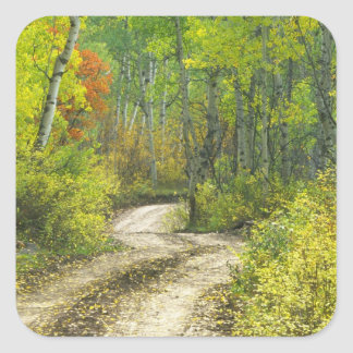 Road with autumn colors and aspens in Kebler Square Sticker