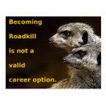 Roadkill que se convierte no es una opción válida  tarjetas postales