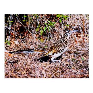 Roadrunner Bird Postcard