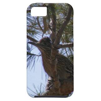 Roadrunner iPhone 5 Cases