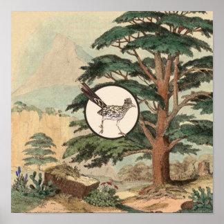 Roadrunner In Natural Habitat Illustration Poster