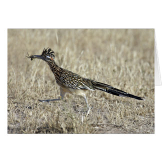 Roadrunner Photograph Note Card