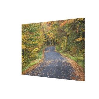 Roadside fall foliage, Southern Vermont, USA Canvas Print