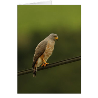 Roadside Hawk Card