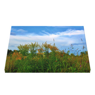 Roadside Wildflowers - Goldenrods & Queen Anne's L Canvas Print