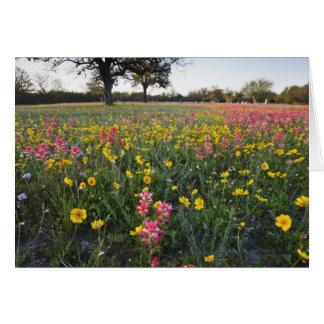 Roadside wildflowers in Texas, spring 3 Card