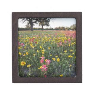 Roadside wildflowers in Texas, spring 3 Gift Box