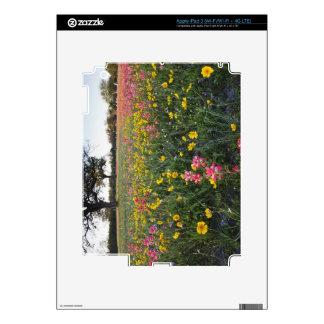 Roadside wildflowers in Texas, spring 3 iPad 3 Decals