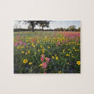 Roadside wildflowers in Texas, spring 3 Jigsaw Puzzle