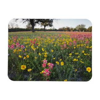 Roadside wildflowers in Texas, spring 3 Magnet