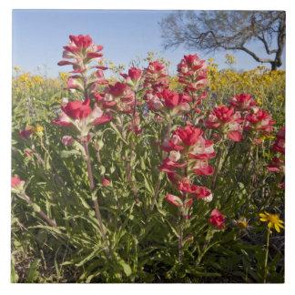 Roadside wildflowers in Texas, spring 4 Ceramic Tile