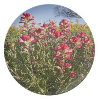 Roadside wildflowers in Texas, spring 4 Dinner Plate
