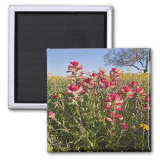 Roadside wildflowers in Texas, spring 4 Magnet