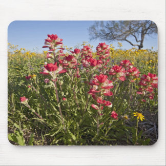 Roadside wildflowers in Texas, spring 4 Mouse Pad