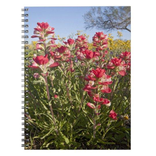 Roadside wildflowers in Texas, spring 4 Notebook