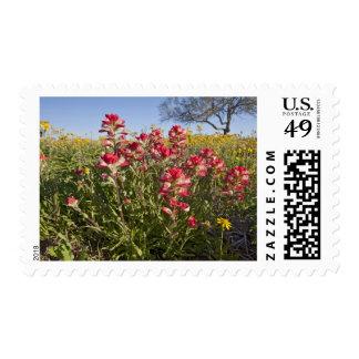 Roadside wildflowers in Texas, spring 4 Postage