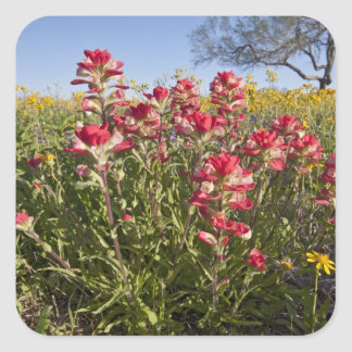 Roadside wildflowers in Texas, spring 4 Square Sticker