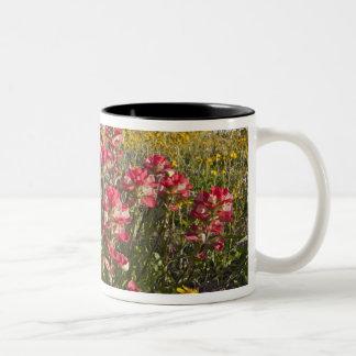 Roadside wildflowers in Texas, spring 4 Two-Tone Coffee Mug