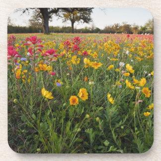 Roadside wildflowers in Texas, spring Beverage Coaster