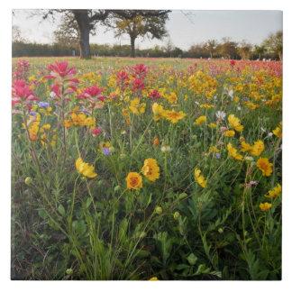 Roadside wildflowers in Texas, spring Ceramic Tile