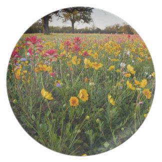 Roadside wildflowers in Texas, spring Dinner Plate