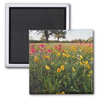 Roadside wildflowers in Texas, spring Magnet