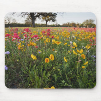 Roadside wildflowers in Texas, spring Mouse Pad
