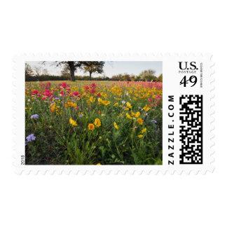 Roadside wildflowers in Texas, spring Postage