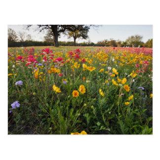 Roadside wildflowers in Texas, spring Postcard