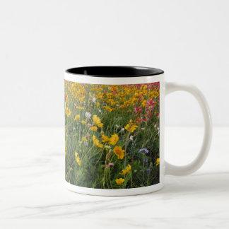 Roadside wildflowers in Texas, spring Two-Tone Coffee Mug