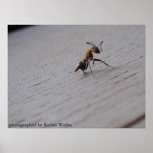 Roaming Ant Poster