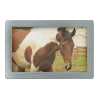 Roaming Paint Horse Buckle Rectangular Belt Buckle